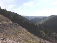 trail-hautes-fagnes-024.jpg